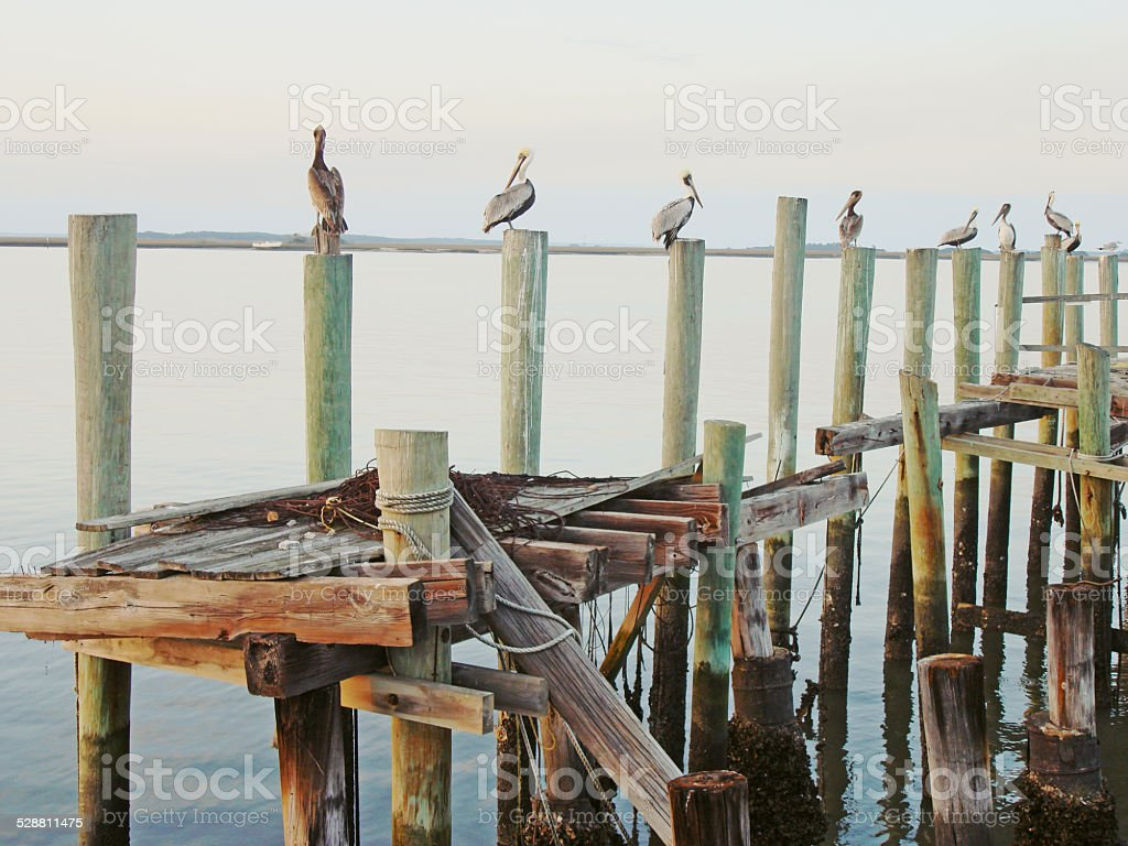 Pelicans on a Dock stock photo
