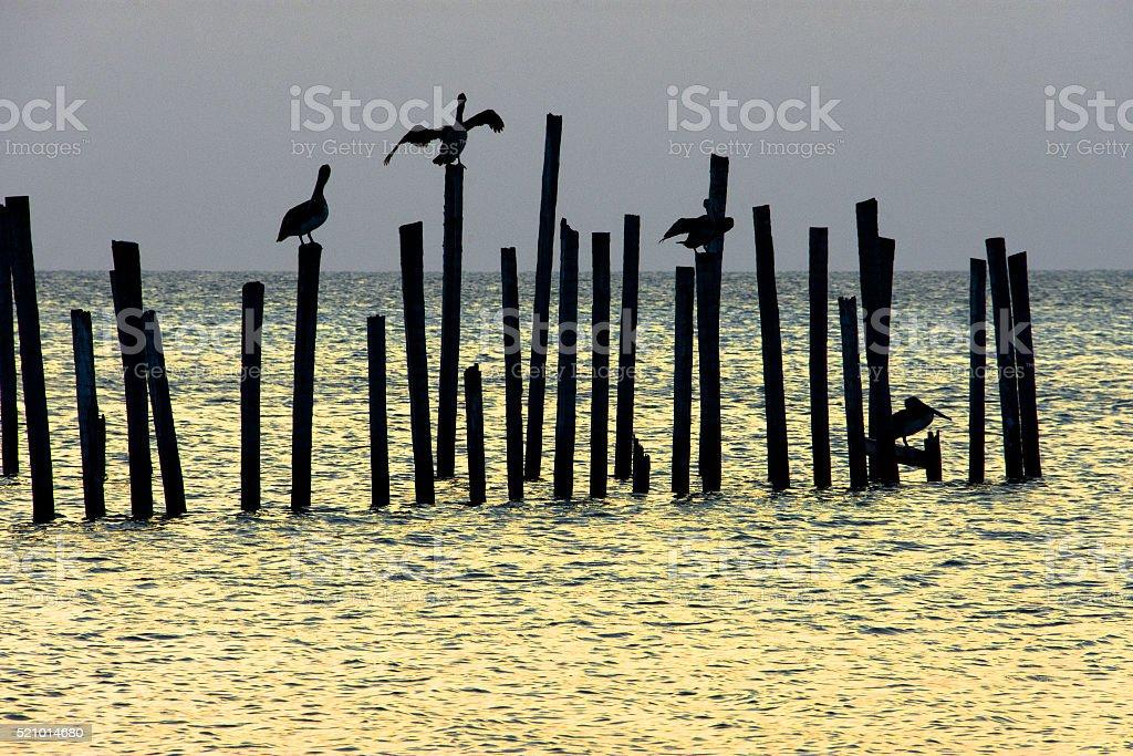 Pelicans on poles stock photo