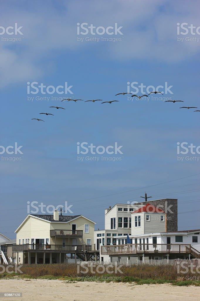 Pelicans over beach houses stock photo