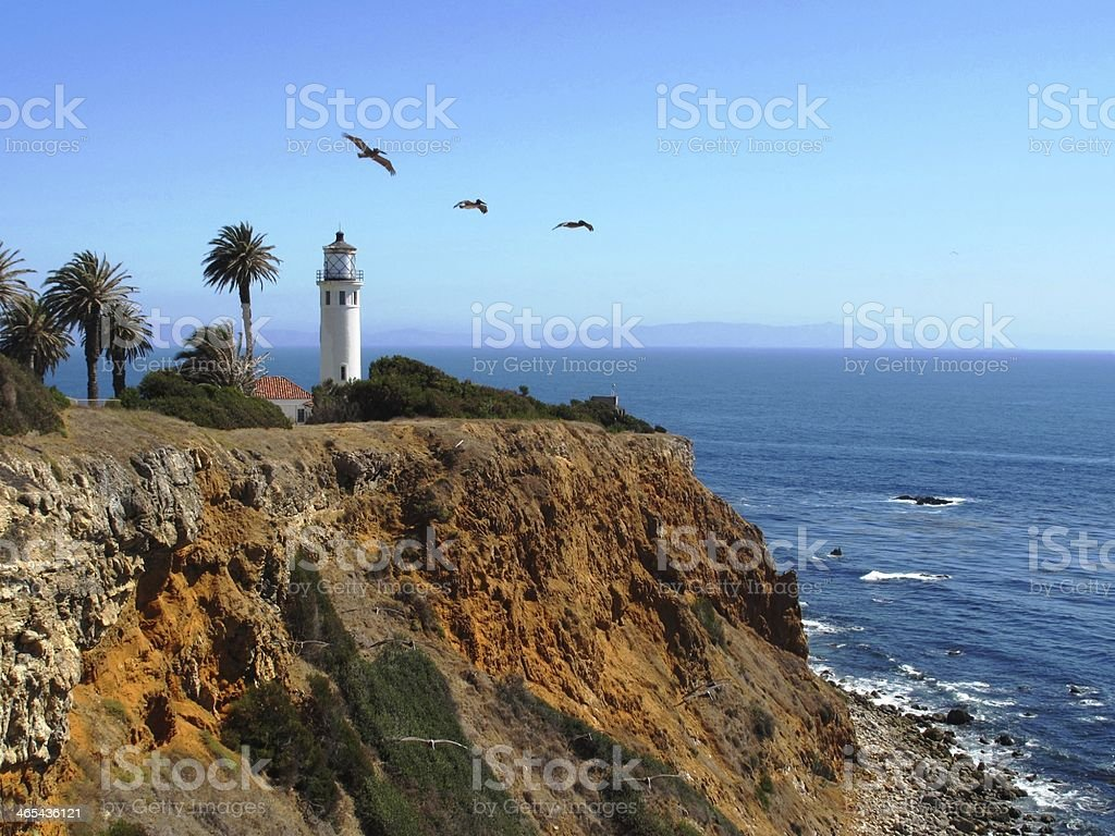 Pelicans over Lighthouse stock photo