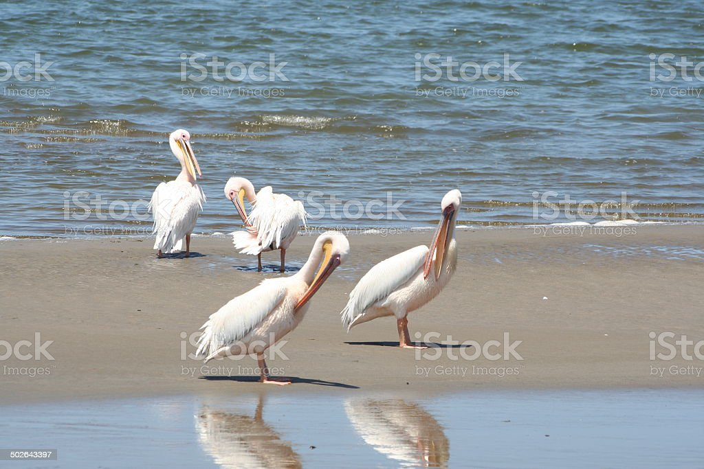 Pelicans rest in the Lagoon of Walvis Bay, Namibia, Africa stock photo