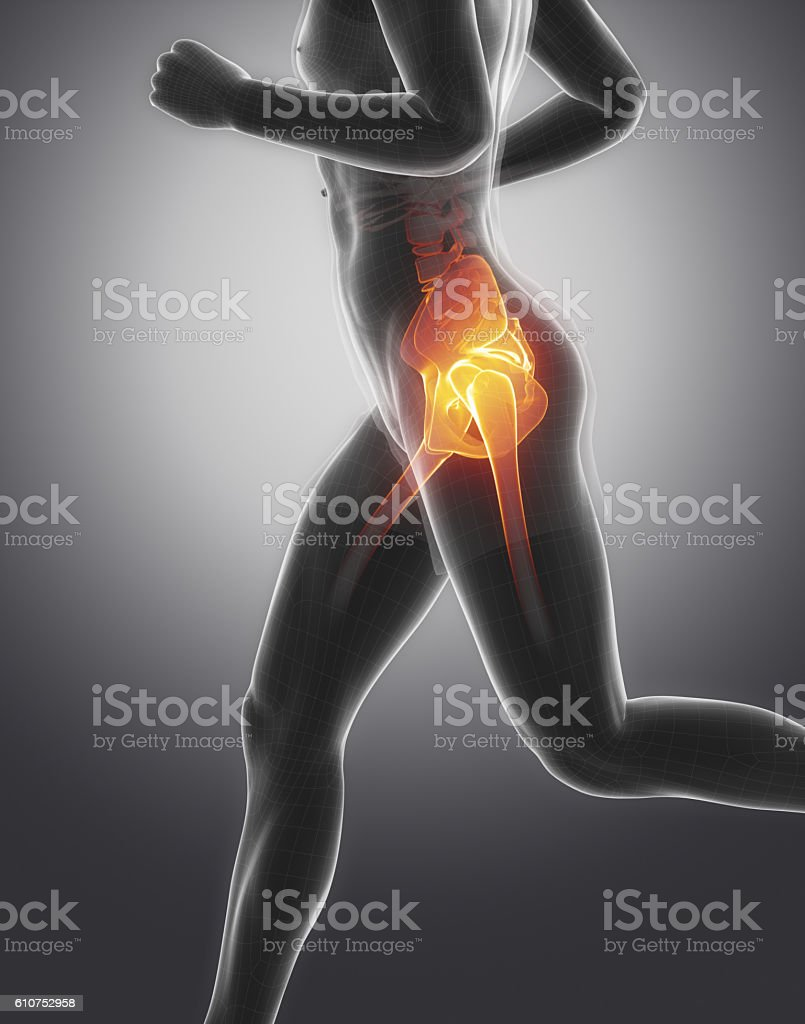 Pelvis anatomy stock photo
