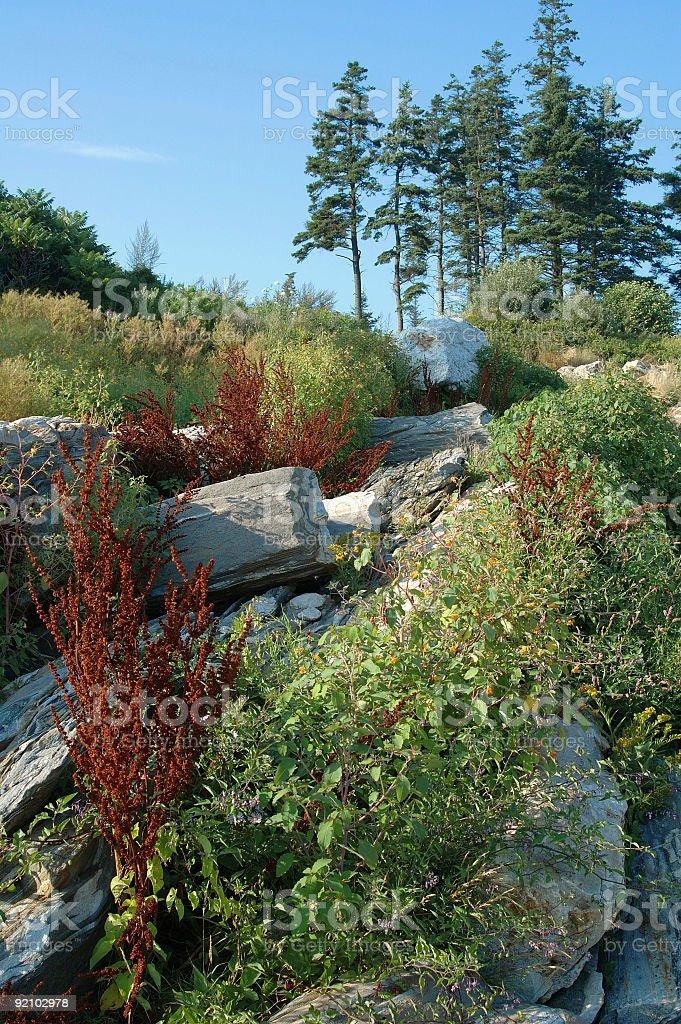Pemaquid Landscape royalty-free stock photo