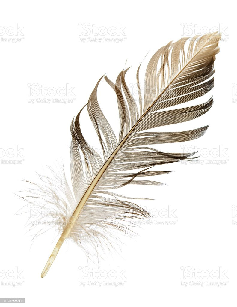 pen feather isolated stock photo