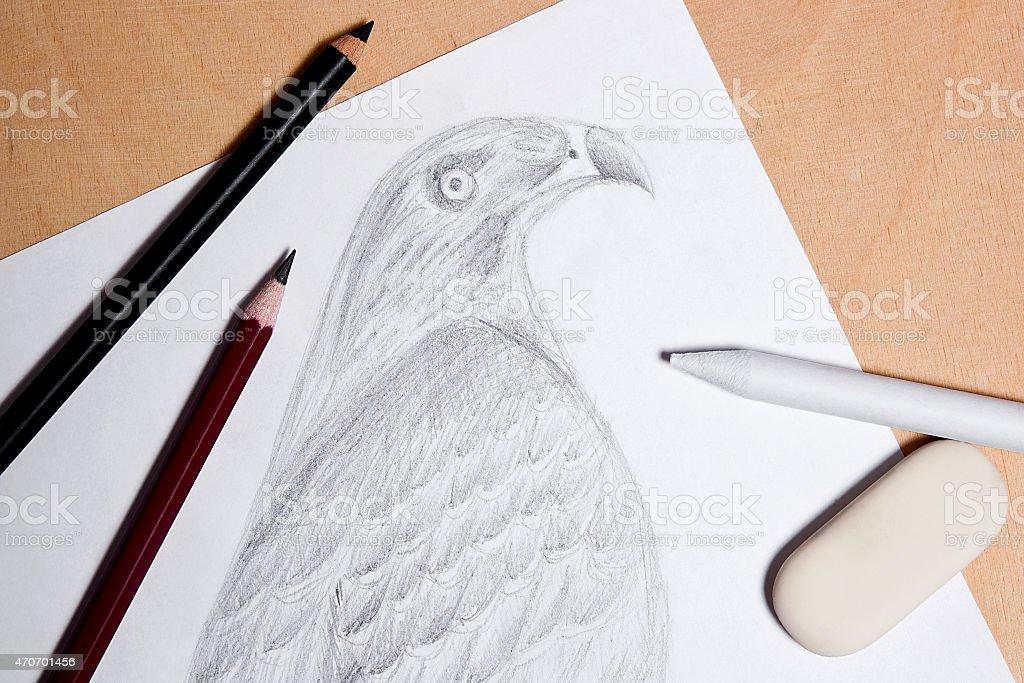 Lápiz, borrador y sello con grafito dibujo hawk. foto de stock libre de derechos