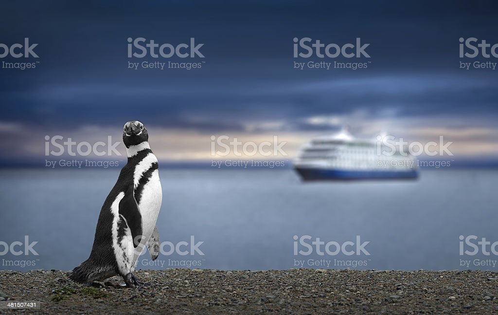 Penguin and Cruise Ship in Patagonia. Awe inspiring travel image. stock photo