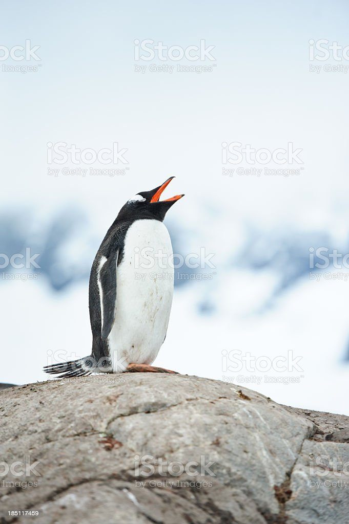 Penguin at Port Lockroy station stock photo