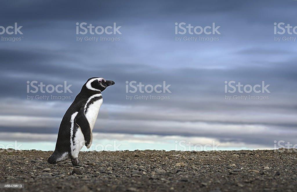 Penguin. Awe inspiring travel image. High definition image. royalty-free stock photo