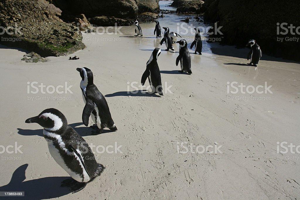 penguin beach party royalty-free stock photo