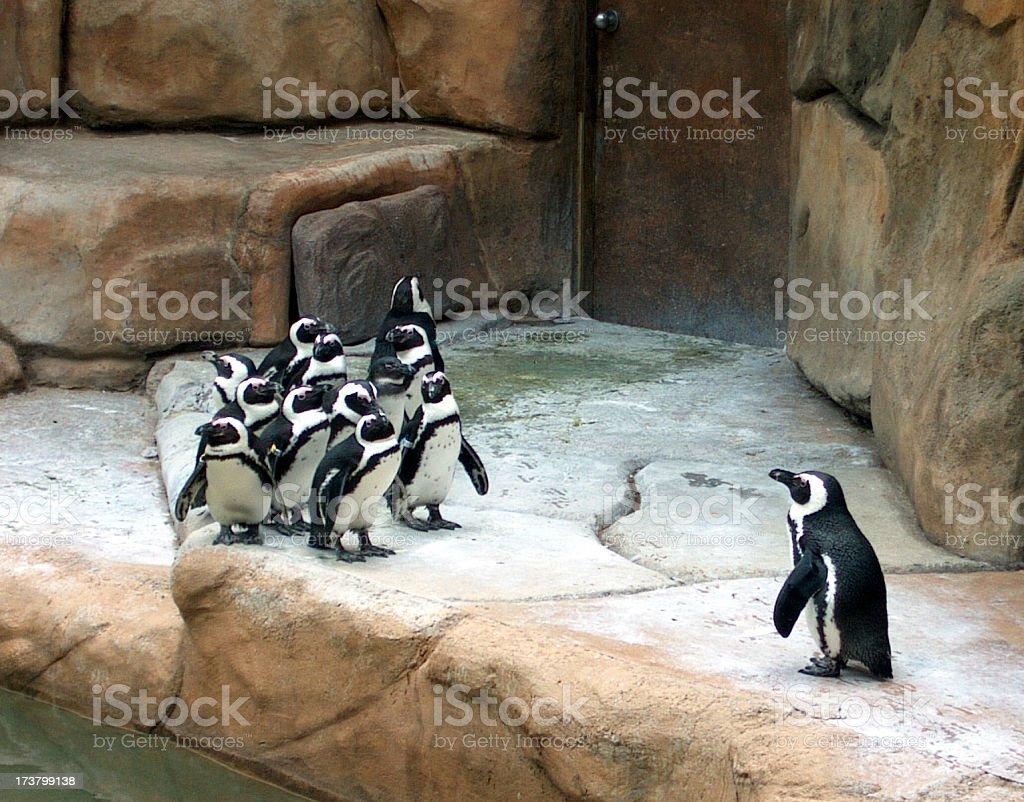 Penguin Bowling royalty-free stock photo