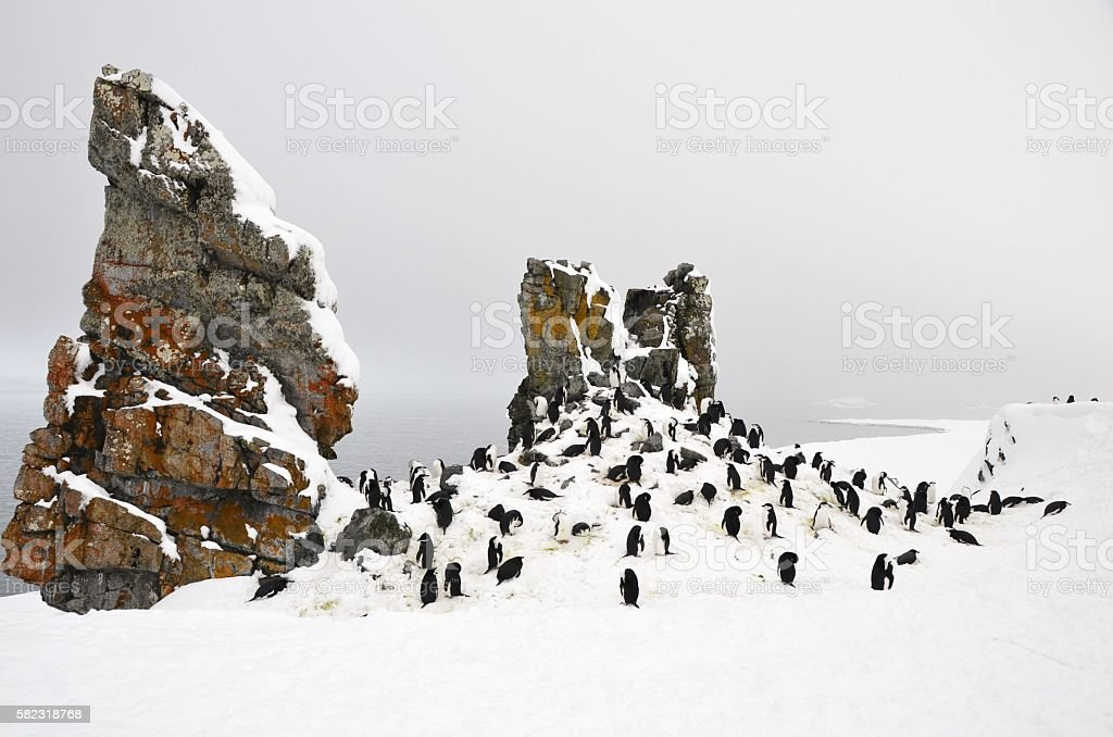 Penguin Colony and Rocks stock photo