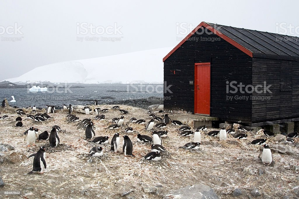 Penguin Colony and Storage Hut, Antarctica stock photo