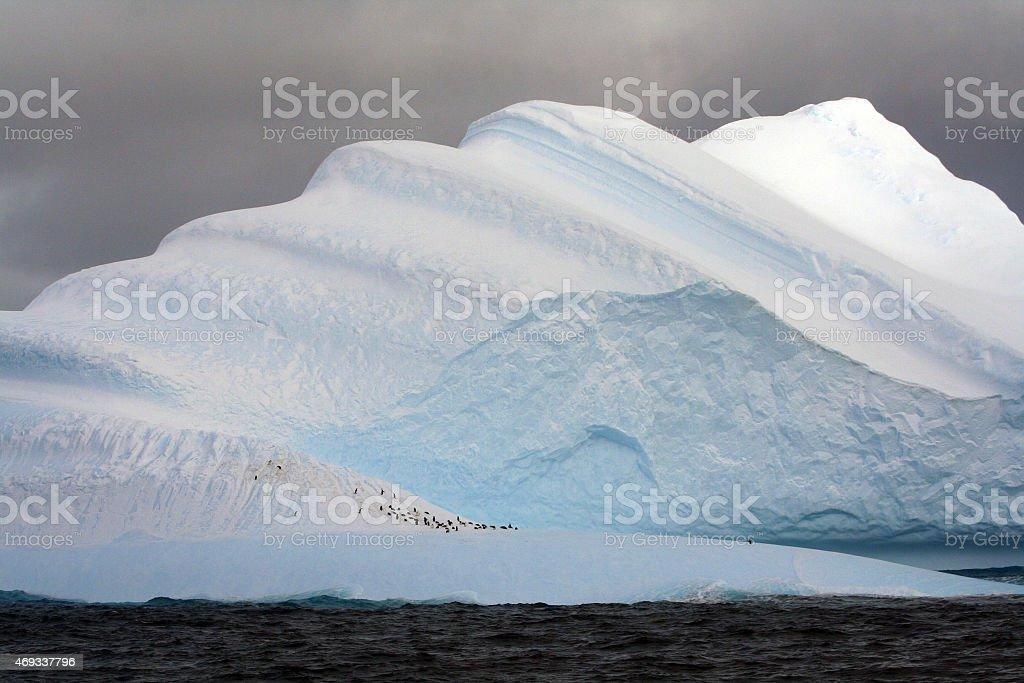 Penguin Colony on Iceberg royalty-free stock photo