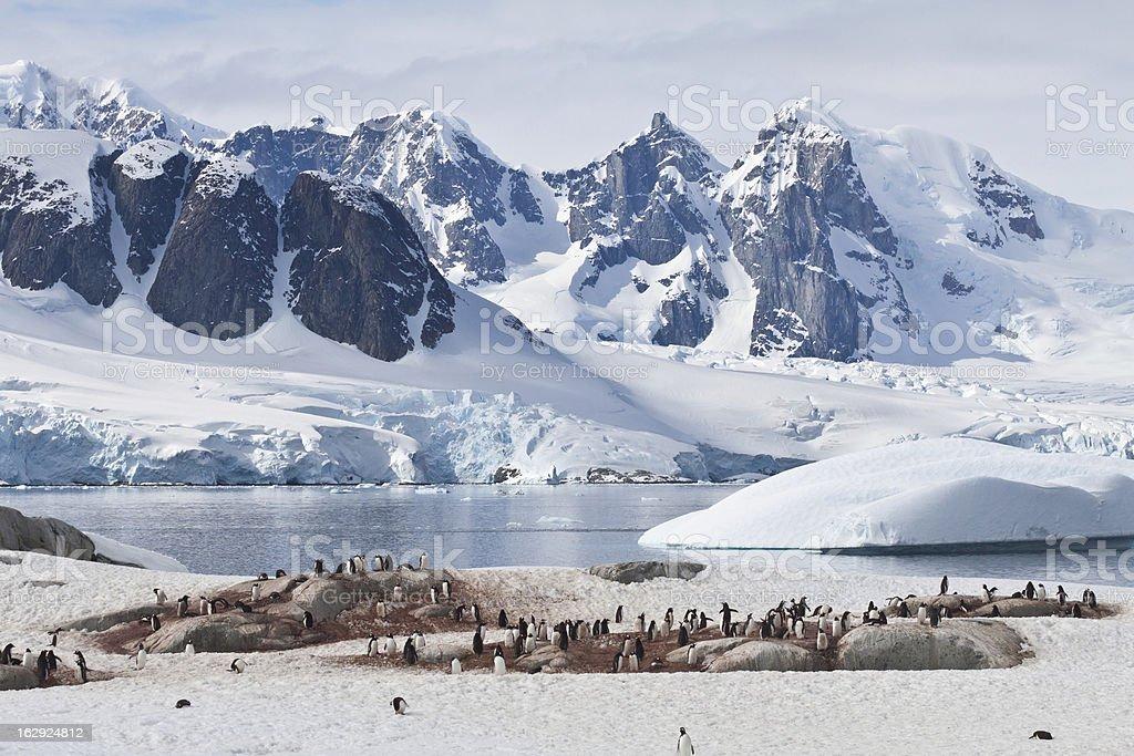 Pinguinkolonie auf Petermann Island vor Gletscherbergen stock photo