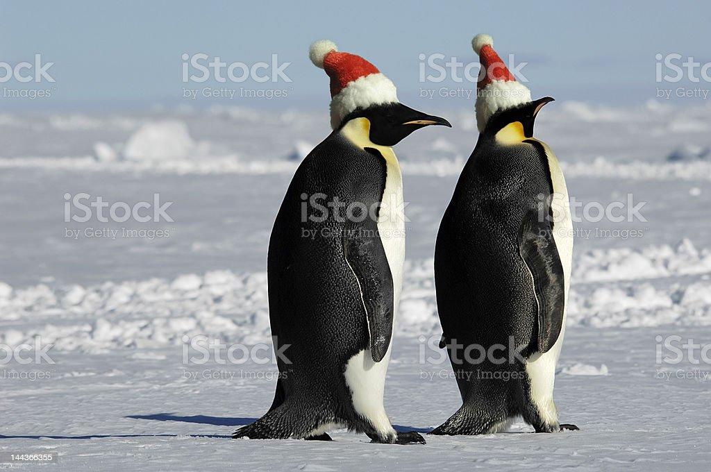ペンギンのカップルはクリスマス ロイヤリティフリーストックフォト