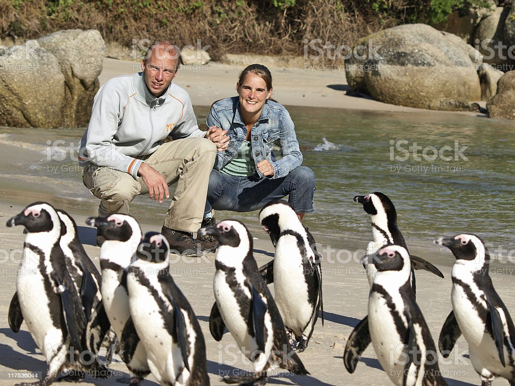 penguin couple royalty-free stock photo
