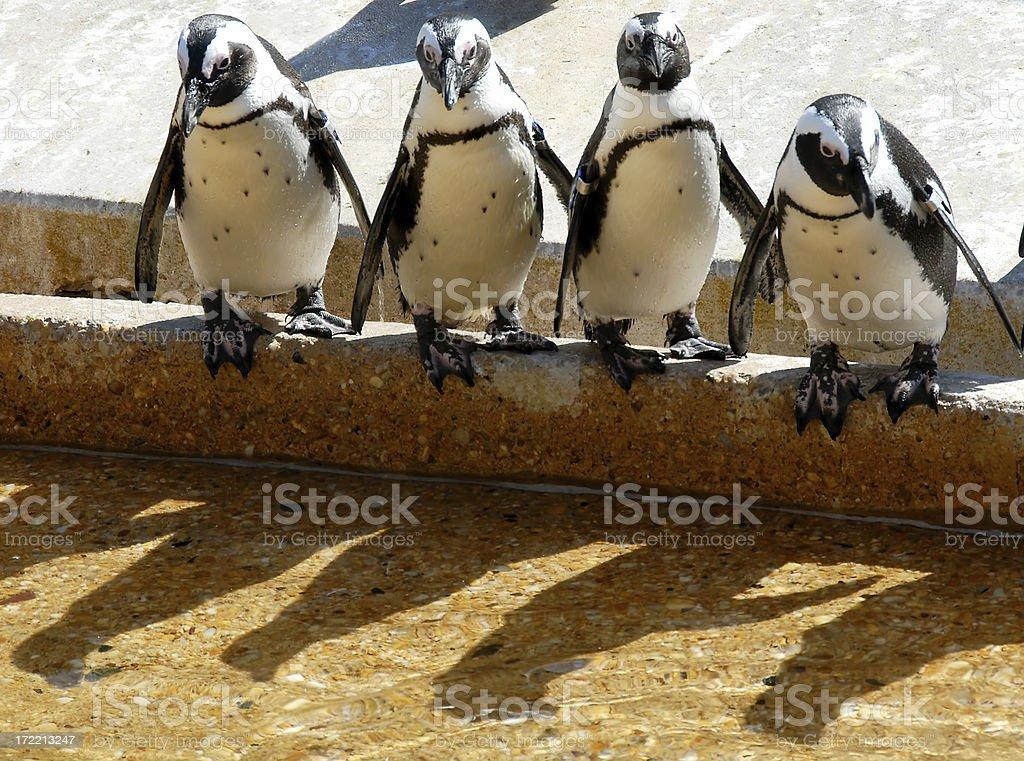 Penguin Do Whop royalty-free stock photo