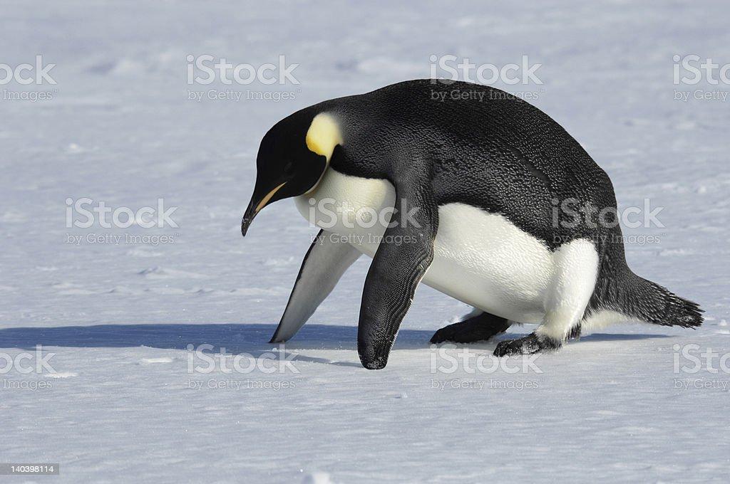 ペンギンフィットネス ロイヤリティフリーストックフォト
