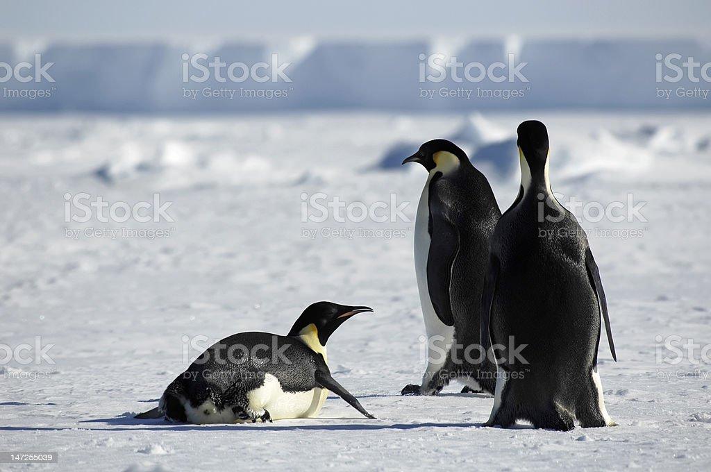 ペンギングループで南極大陸 ロイヤリティフリーストックフォト