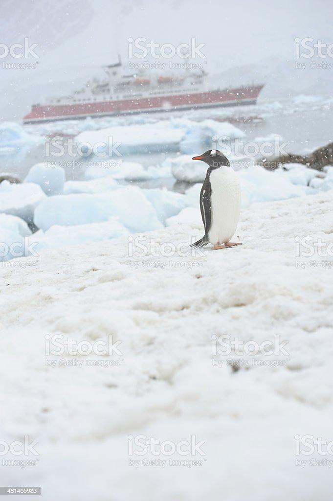 Penguin in snow stock photo