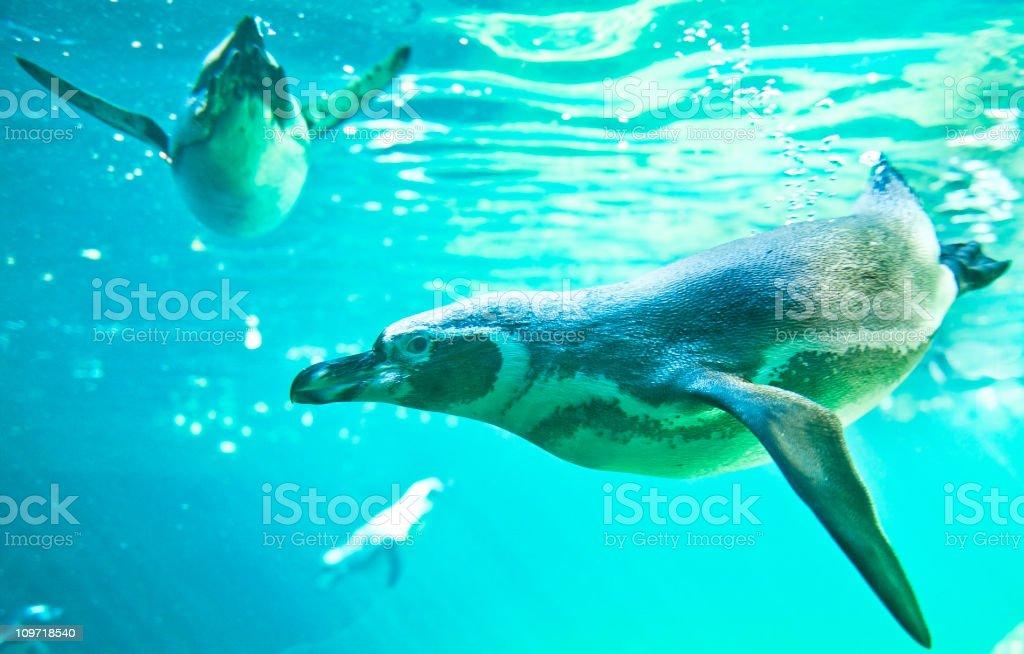 Penguin in sunny water ocean underwater stock photo