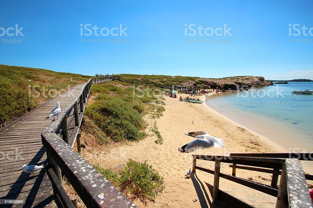 Penguin Island, Western Australia stock photo