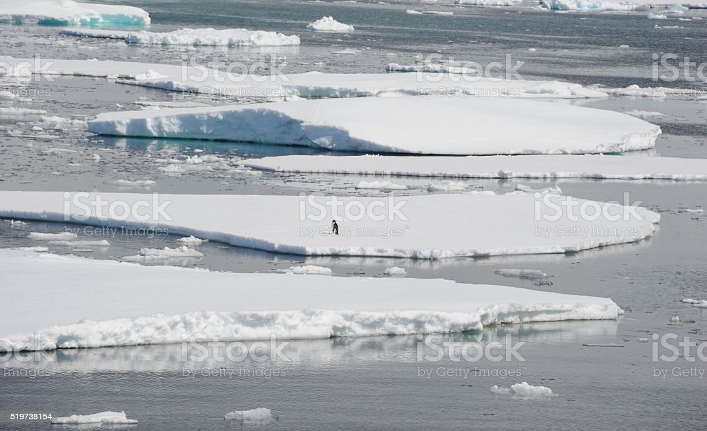 Penguin on ice floe stock photo