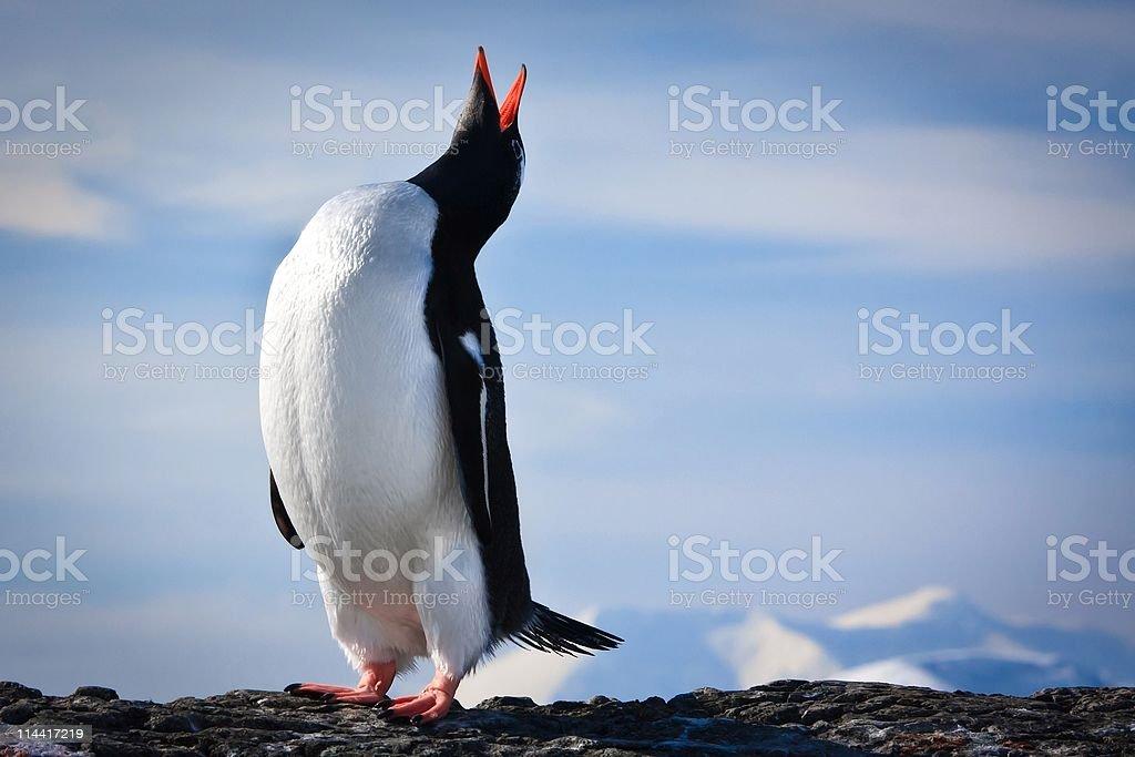 penguin on the rocks stock photo