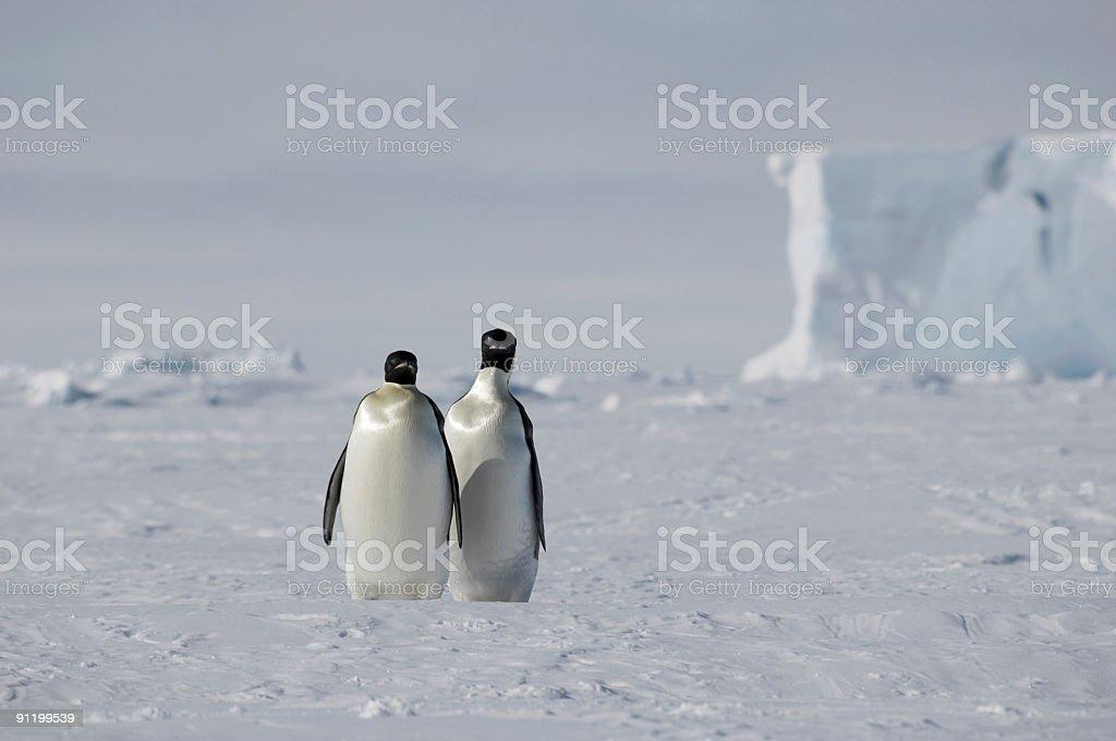 ペンギンペア ロイヤリティフリーストックフォト