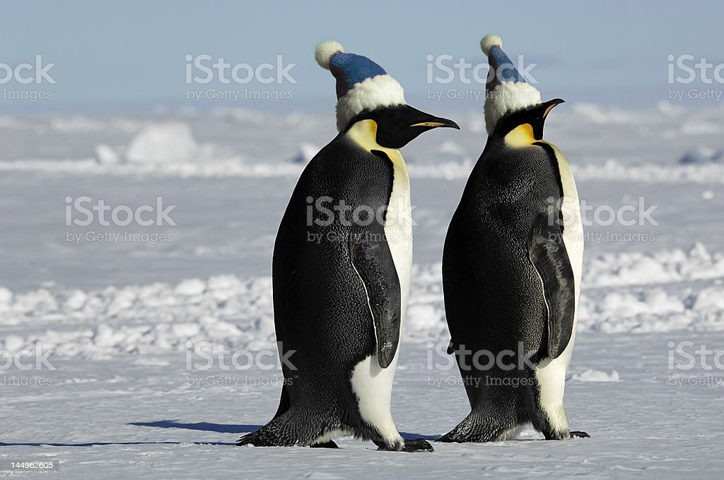 Penguin pair with caps royalty-free stock photo