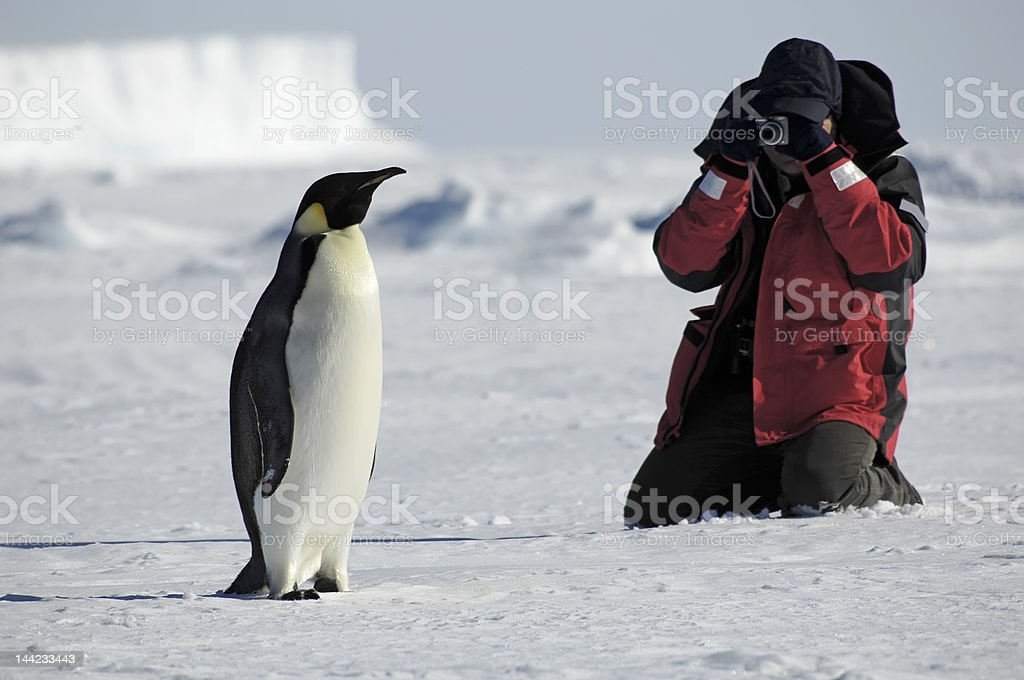 ペンギンの写真 ロイヤリティフリーストックフォト