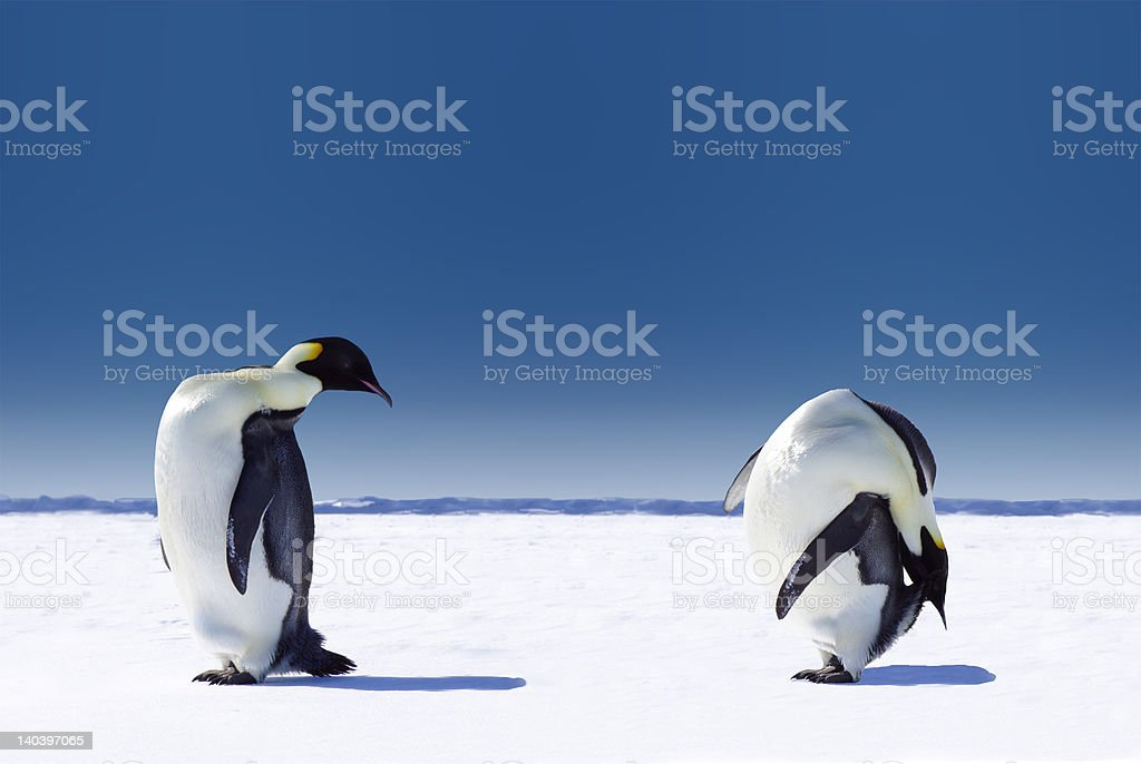 Penguin Sport royalty-free stock photo