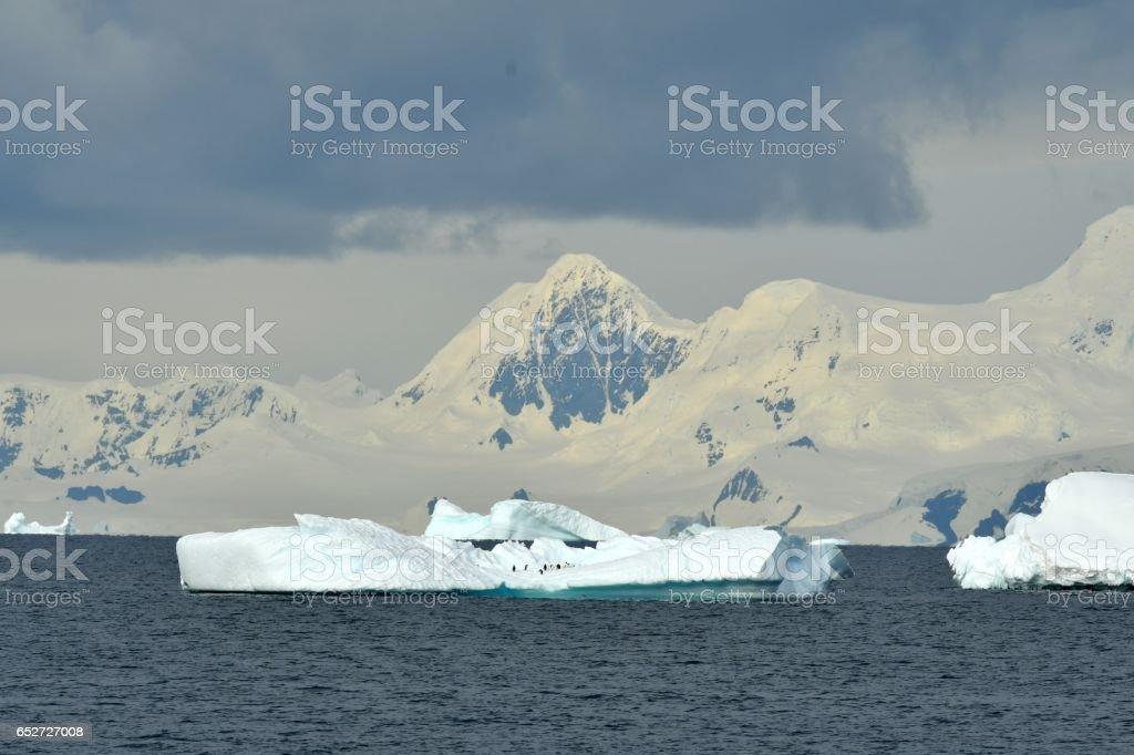 Penguins and Icebergs stock photo