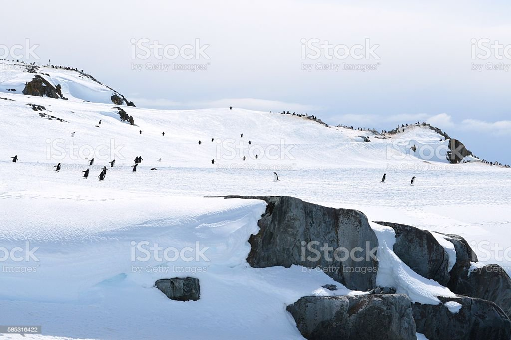 Penguins and Rocks stock photo