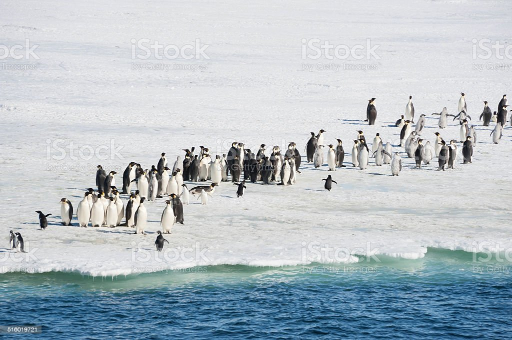 Penguins at edge of sea ice stock photo
