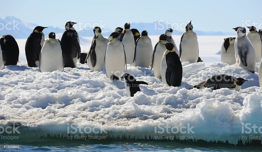 Penguins at ice edge stock photo