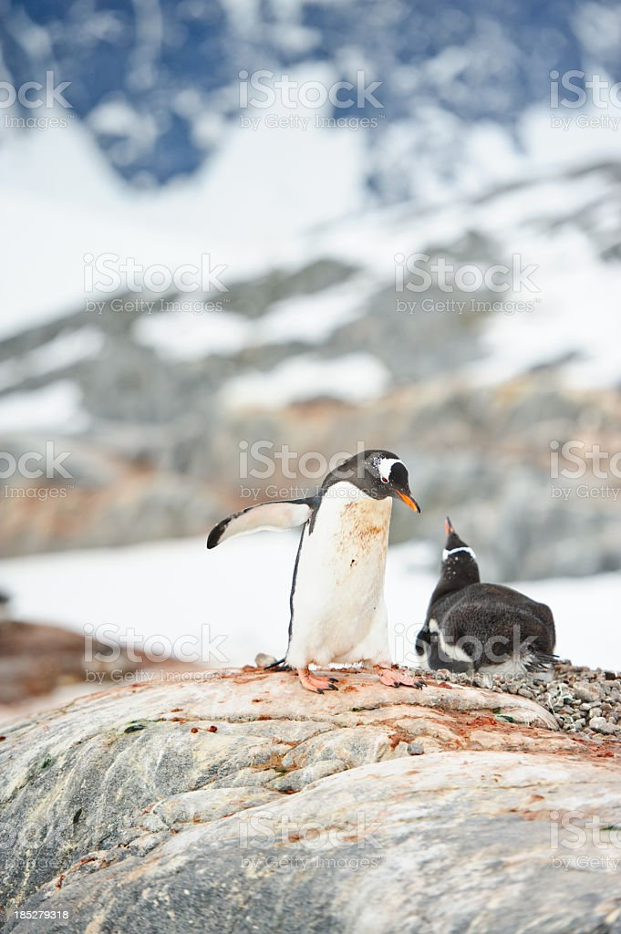 Penguins at Port Lockroy stock photo