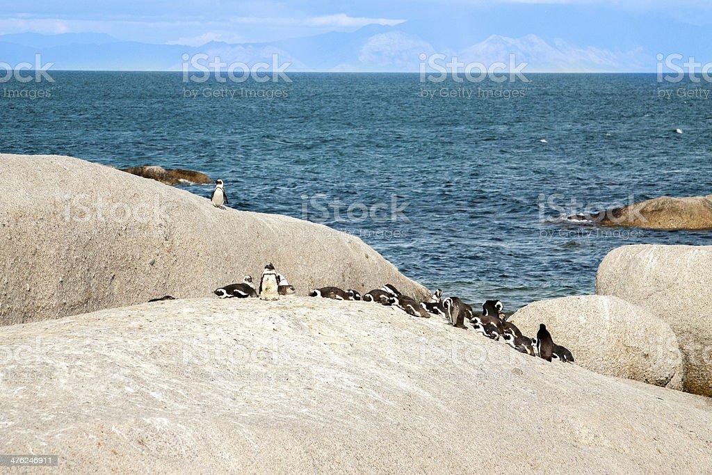 penguins at the beach of Atlantic ocean royalty-free stock photo