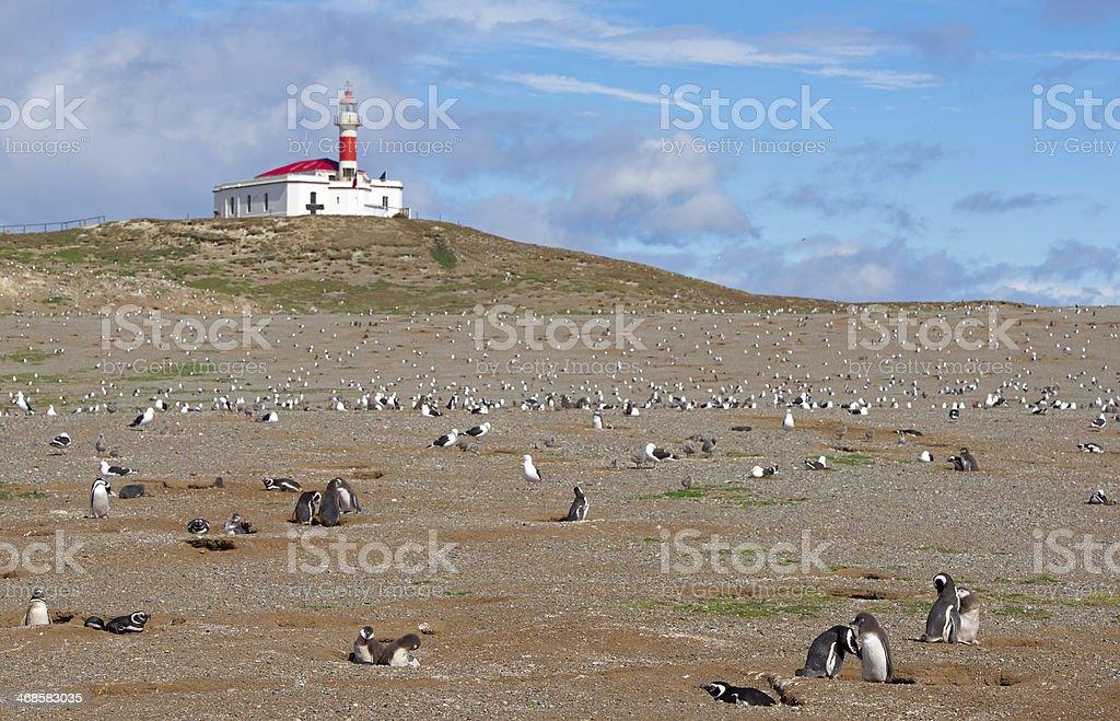 Penguin`s colony on the Magdalena Island stock photo