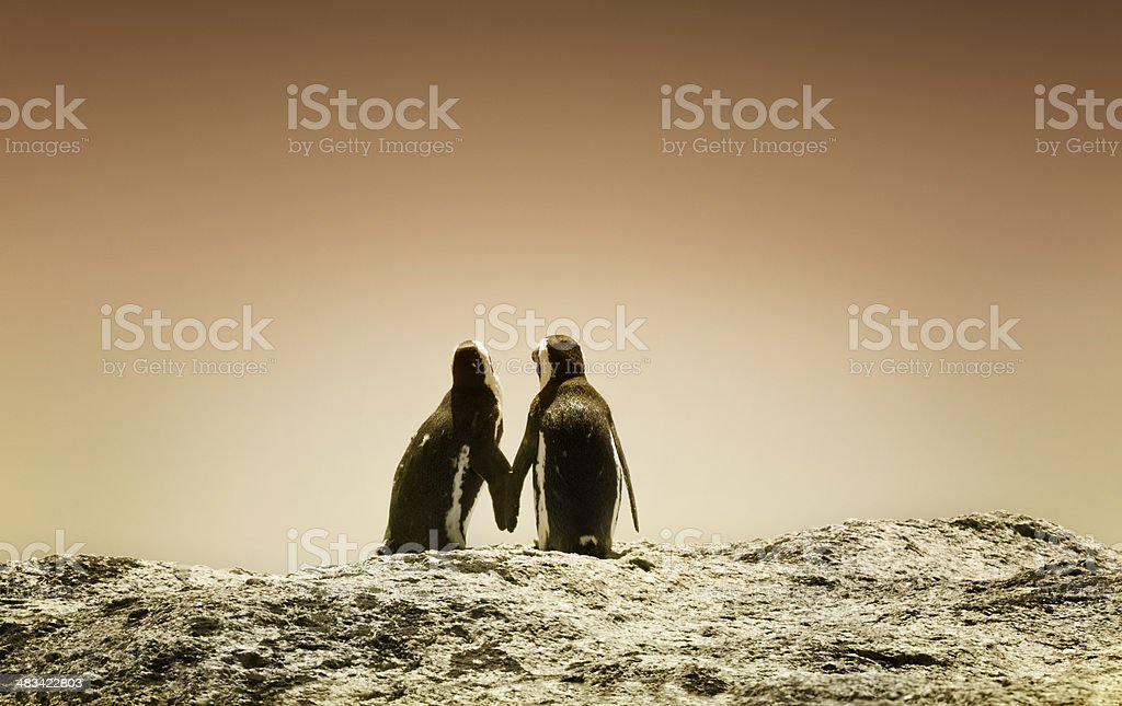 penguins holding hands at sunset stock photo
