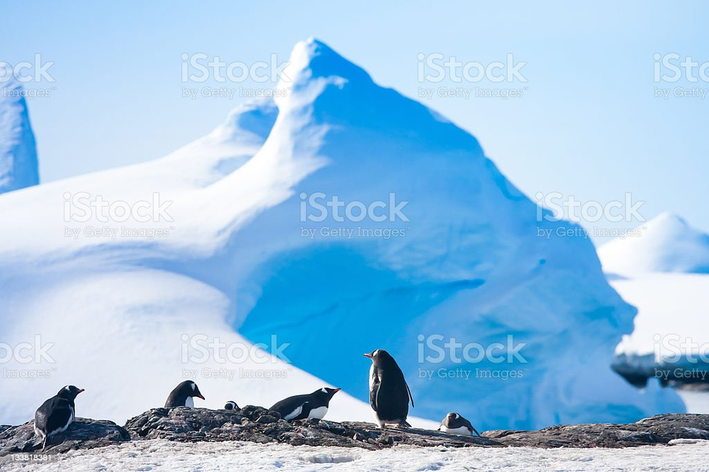 penguins in Antarctica royalty-free stock photo