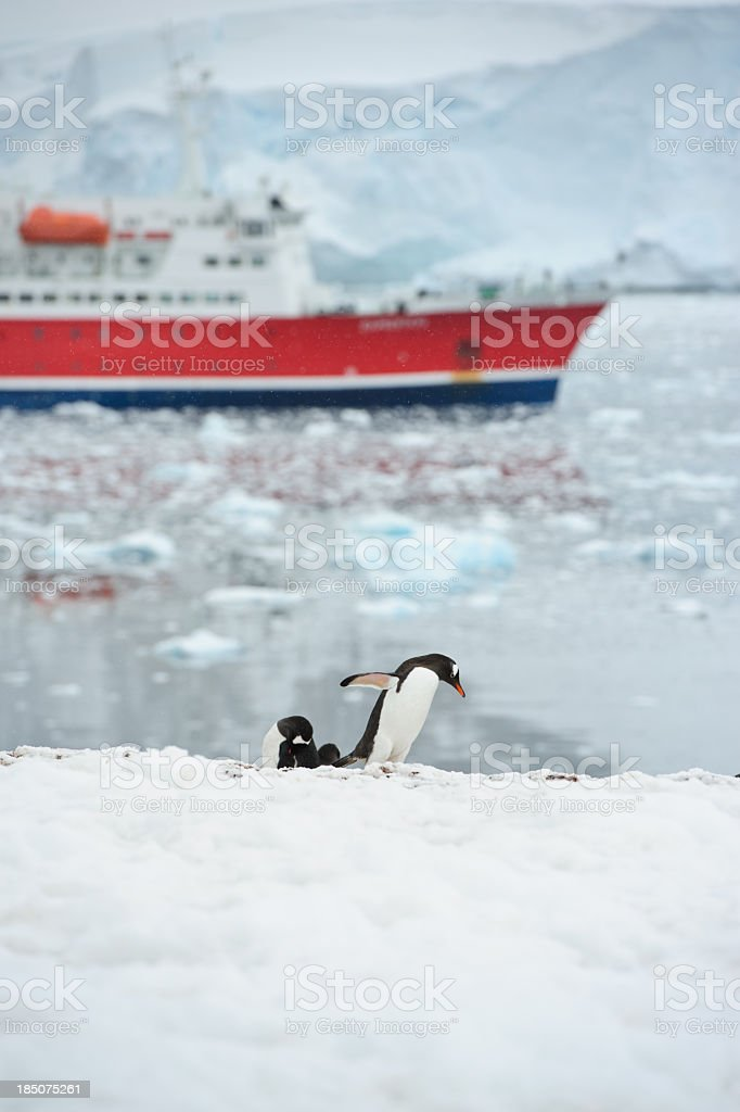 Penguins in Neko harbour stock photo