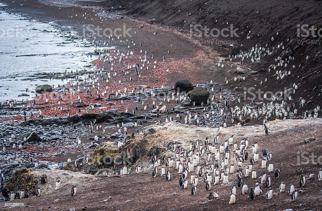 Penguins in the South Shetland Islands stock photo