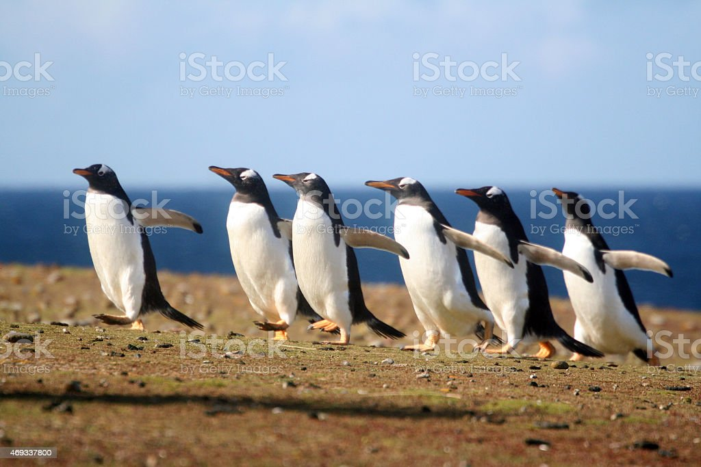 Penguins on a Mission royalty-free stock photo