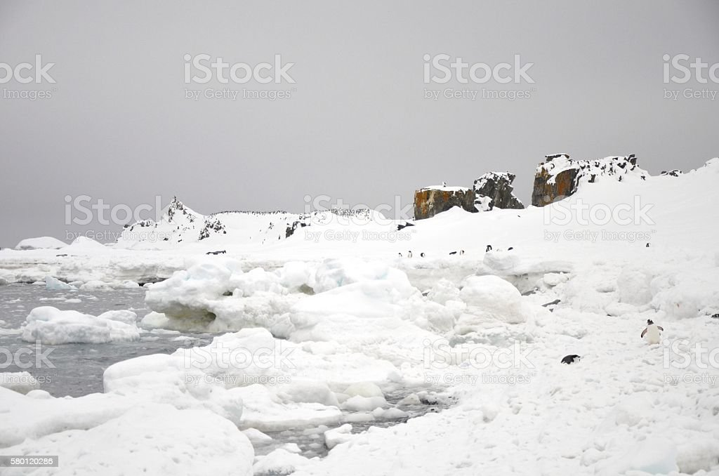 Penguins on Antarctic Coast stock photo