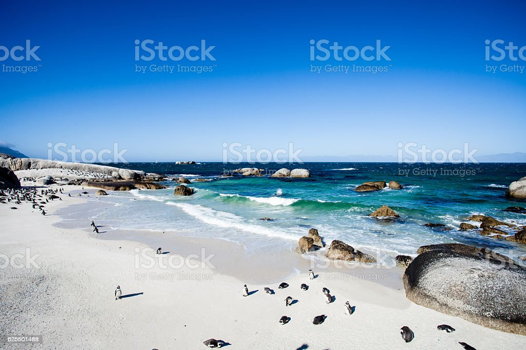 Penguins on Boulders beach, Cape Town stock photo