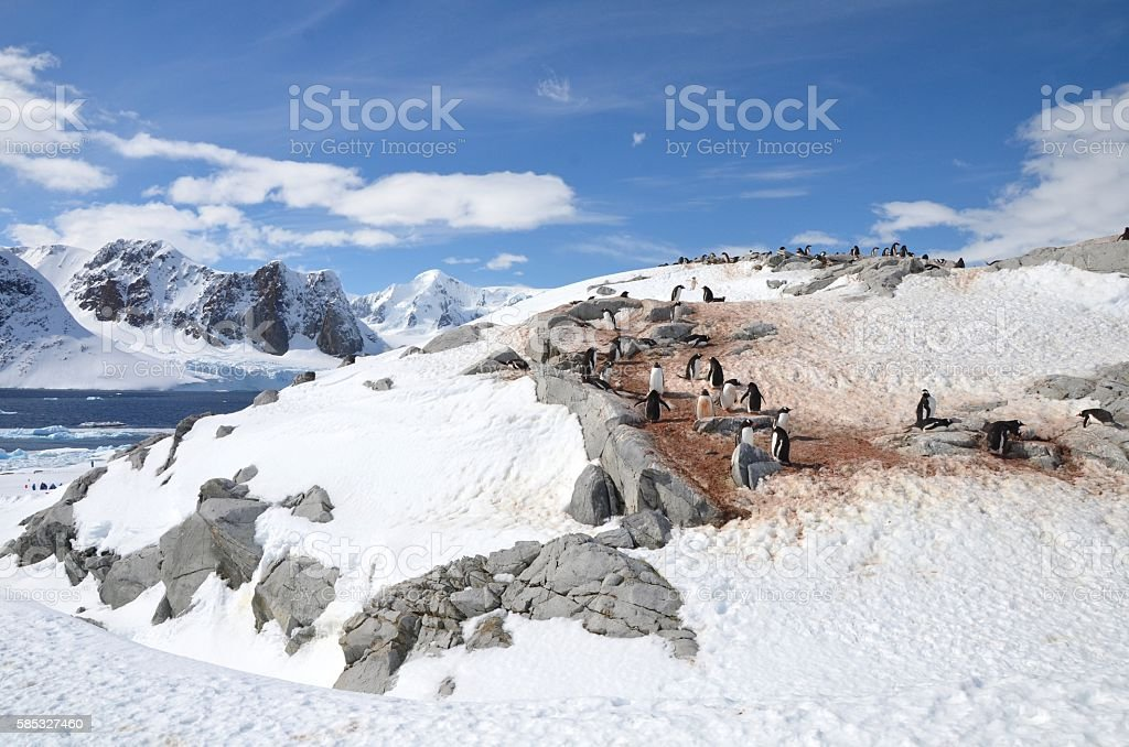 Penguins on Rocks stock photo
