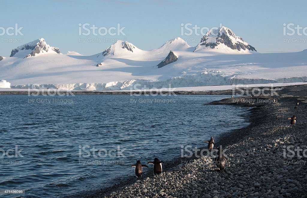 Penguins on the Beach stock photo