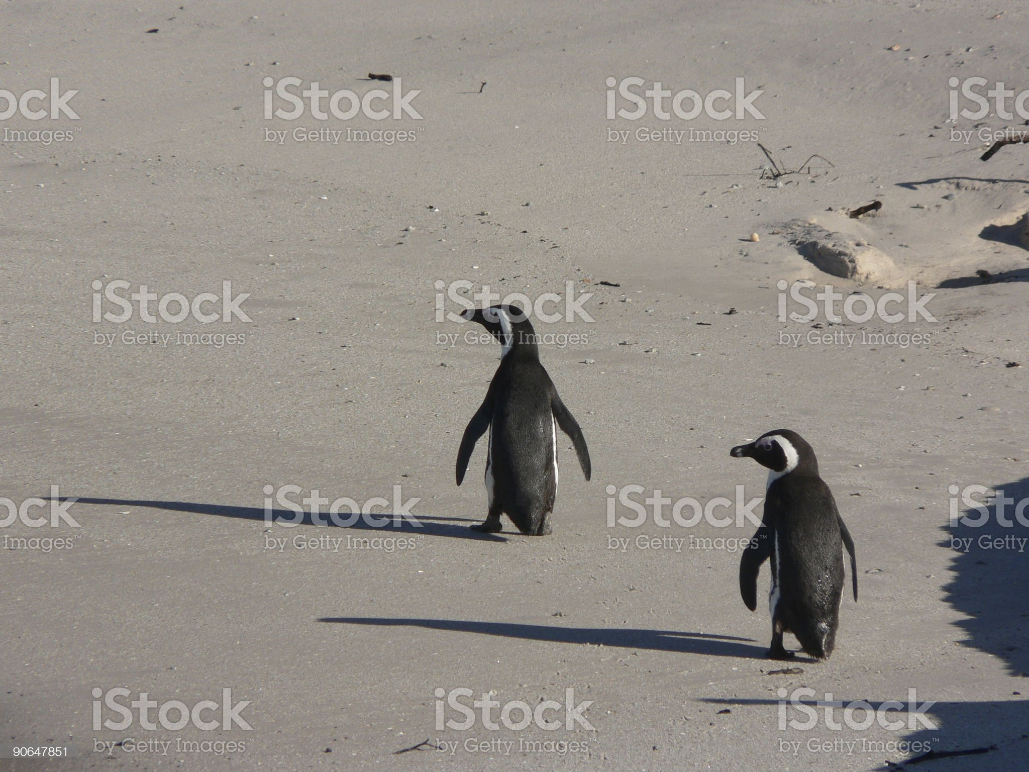 Penguins on the beach royalty-free stock photo