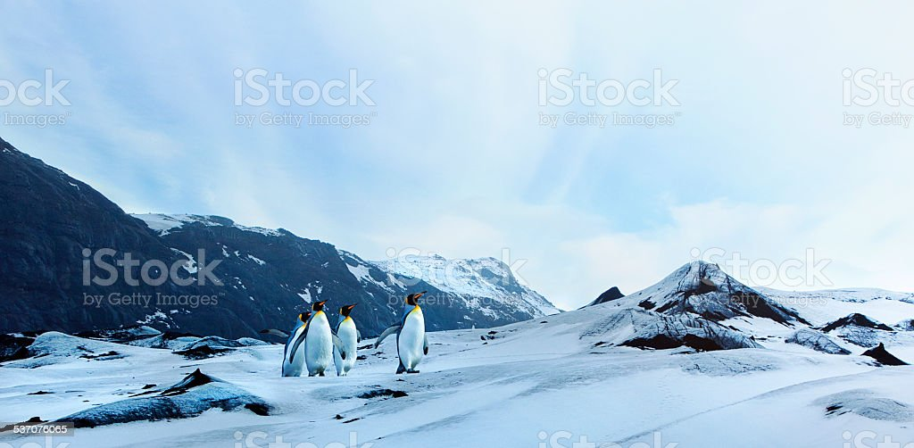 Penguins on Winter Tundra stock photo
